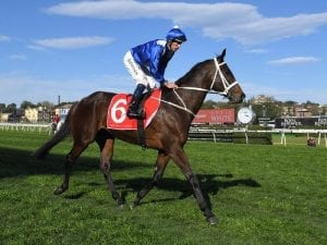 Winx has arrived in Melbourne