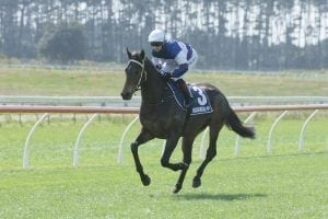 Luckless Hasabro leaves trainer pondering