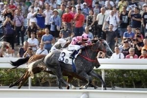Prawn prevails in Size's National Day Cup stoush