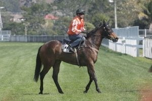 Promising three-year-old to debut