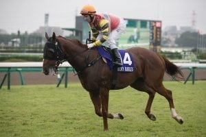 Injury halts Lucky Bubbles in Sprinters Stakes