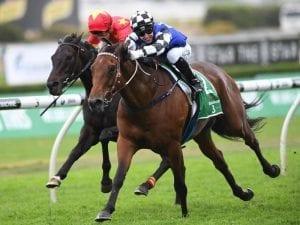 Big Duke poised for Royal Randwick major