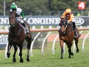 Newcastle form to stack up at Randwick