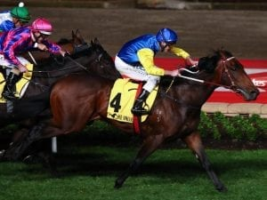 Leonardi Da Hinchi claims G2 Stutt Stakes