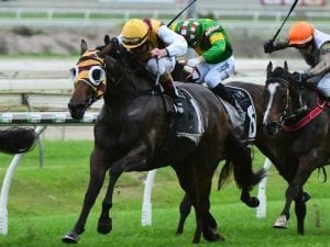 Most Important win for Gollan in Noud