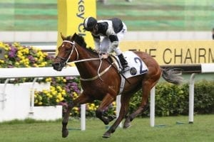 Exultant on the road to adulation in Sunday's Jockey Club Cup