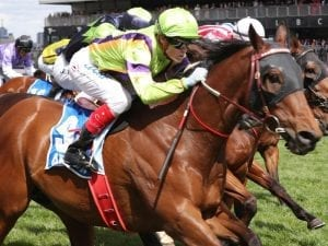 Thermal Current storms to Flemington win