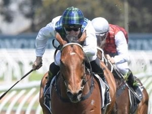 Red Excitement after another Rosehill win