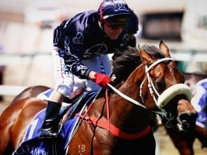 Zoustar to shuttle to England