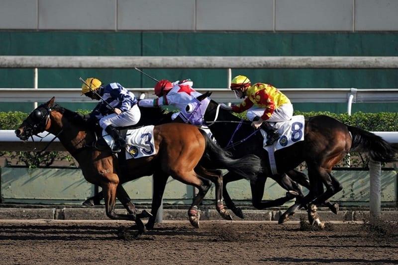 American horse racing betting explained in spanish ferrer vs murray betting expert foot