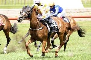 Masetto wins at Tauranga
