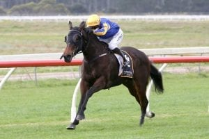Melt ready to fly in Guineas