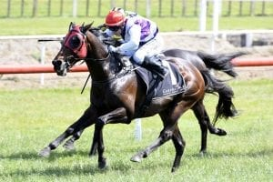 Ocean Emperor goes back-to-back in Tauranga Stakes