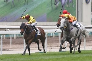 Fownes says Southern Legend ready to step up