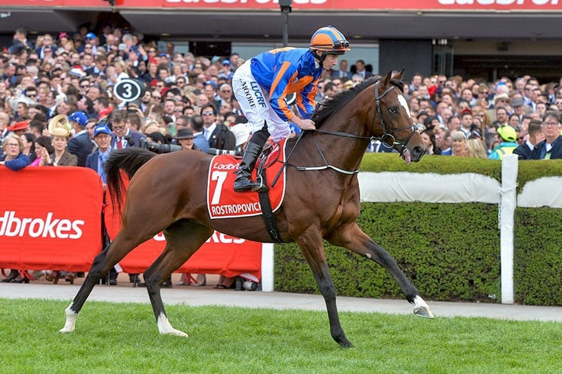 Melbourne Cup horses | All runners in 2018 | Latest odds