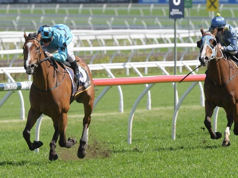 Doubt Defying returns to Randwick for G2   Horse Betting