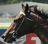 2013 Golden Slipper Winner