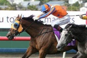 Stayer a live chance in Trentham Stakes