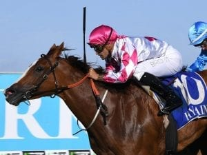 Champagne Cuddles to resume at Flemington