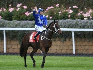 Winx ready to run in barrier trial
