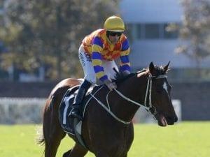 Matt Dunn-trained gelding ready to fire