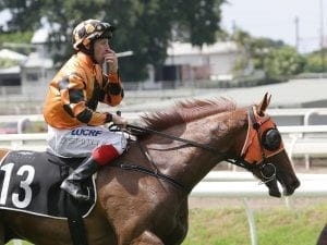 Doss out of Magic Millions Guineas