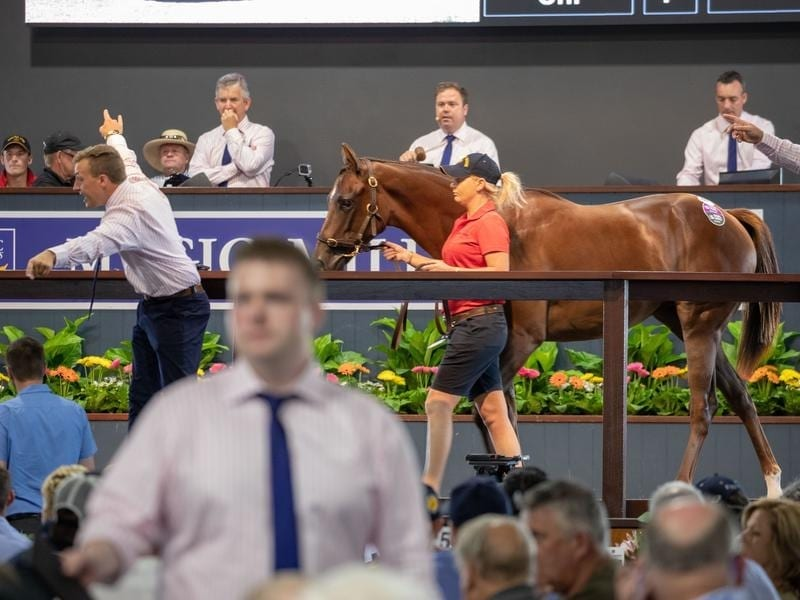 magic millions sale