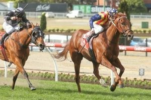 Oakleigh Plate - what does history say