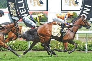Bookies backing Te Akau trifecta