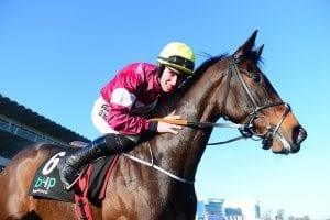 Gordon Elliott hoping Apple's Jade can seize Champion Hurdle chance