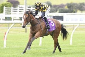 Bavella the benchmark for Noble