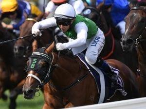 Tassie gelding wins Flemington Group Three