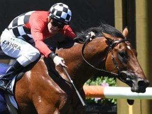 Schabau toughs it out again at Flemington