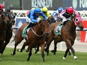 Field of 14 for Group One All Aged Stakes
