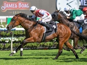 Shoals scratched from Oakleigh Plate