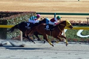 Oval Ace stays unbeaten in Hyacinth on Japan Road To The Derby