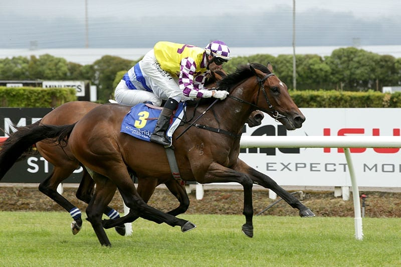 New Zealand Derby Betting | Horse Racing Info | Tips & Odds