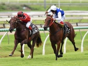 Decision time looms for Nolan-trained 2YO
