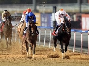 Wadeeaa seeks more group glory in Liwa Oasis