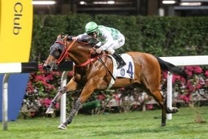 Fat Turtle aims to rise in Happy Valley feature