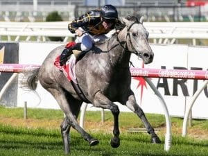 Grey Shadow scores first-up at Caulfield