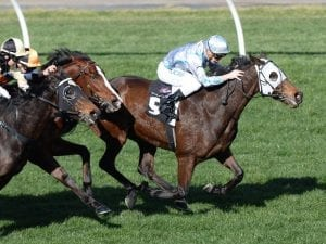 Queensland campaign on cards for Red Alto