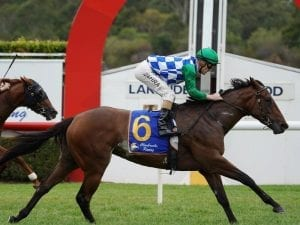 Fillies can press claims for SA features