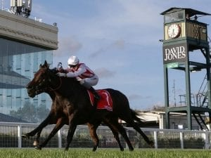 Our Libretto in Sydney to run at Randwick