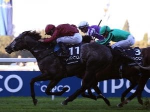 Roaring Lion to stand at Cambrdige Stud