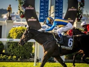 Music Magnate to run at the Gold Coast