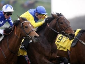 Marmelo a winner on Newbury return
