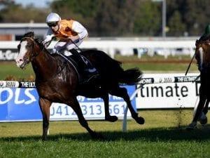 Menari to gallop at Warwick Farm