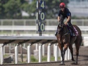 Viddora clear to run in Chairman's Sprint