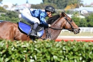 Underwhelming gallop from Auckland Cup winner